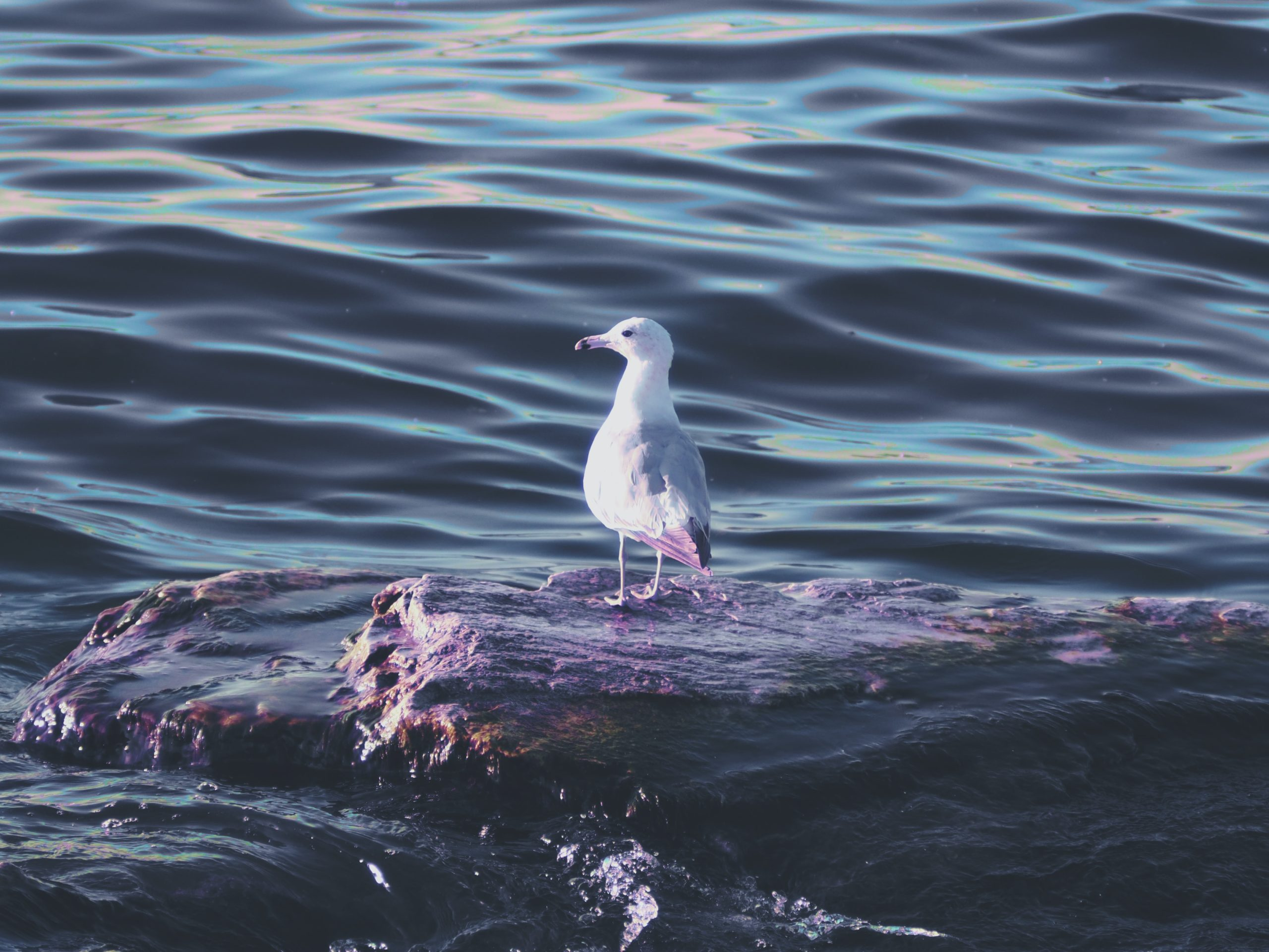 seagull in the summer