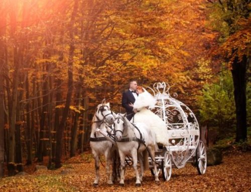 Plan the Perfect Fall Wedding
