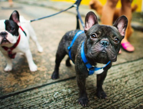 New study shows that dogs really do make the best personal trainers